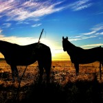 Horses at Sunrise - Wyoming